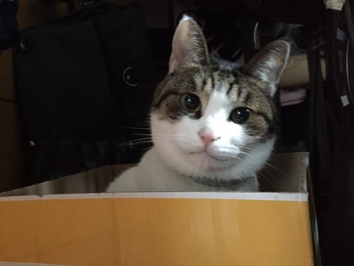 【猫莎】收了委屈的喵~