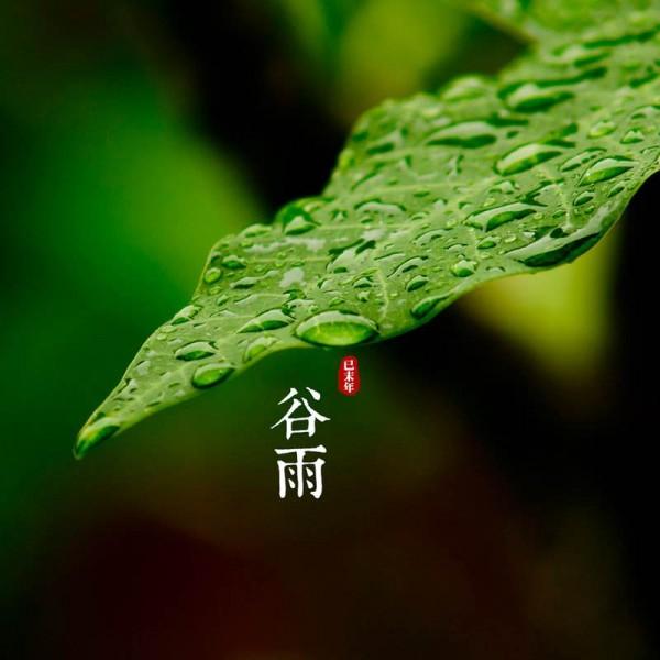 【呆璐】谷雨现花旦