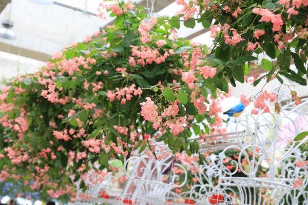 周末亲子游,观郁金香徜徉花之海