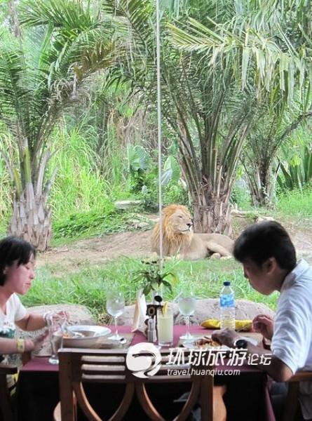 巴厘岛野生动物园:在狮子餐厅与野兽进餐(组图)