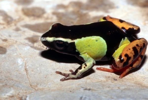各种稀奇古怪的青蛙 组图