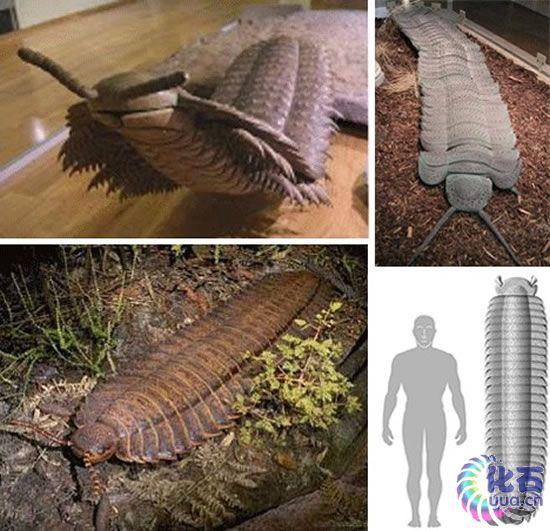 十四种怪异的灭绝动物 旋齿鲨如同巨型绞肉机 组图