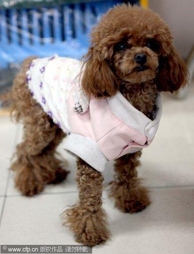 小狗被雨淋了会感冒吗 刚才淋雨回来 不让我擦干