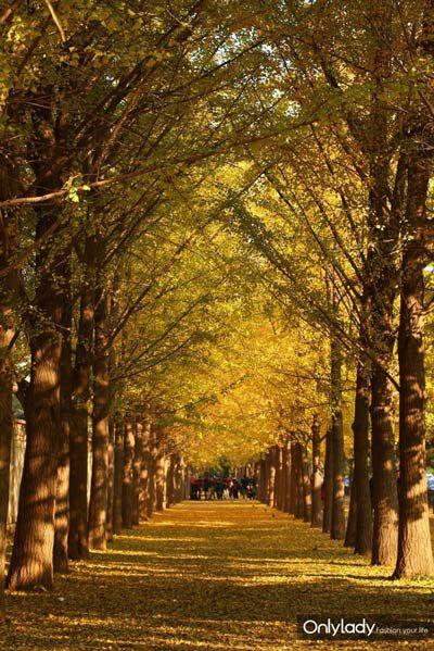 最美的秋天在京城 如诗如画赏银杏